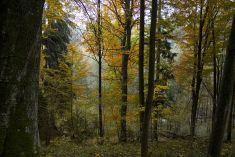 Příroda v okolí Loučovic